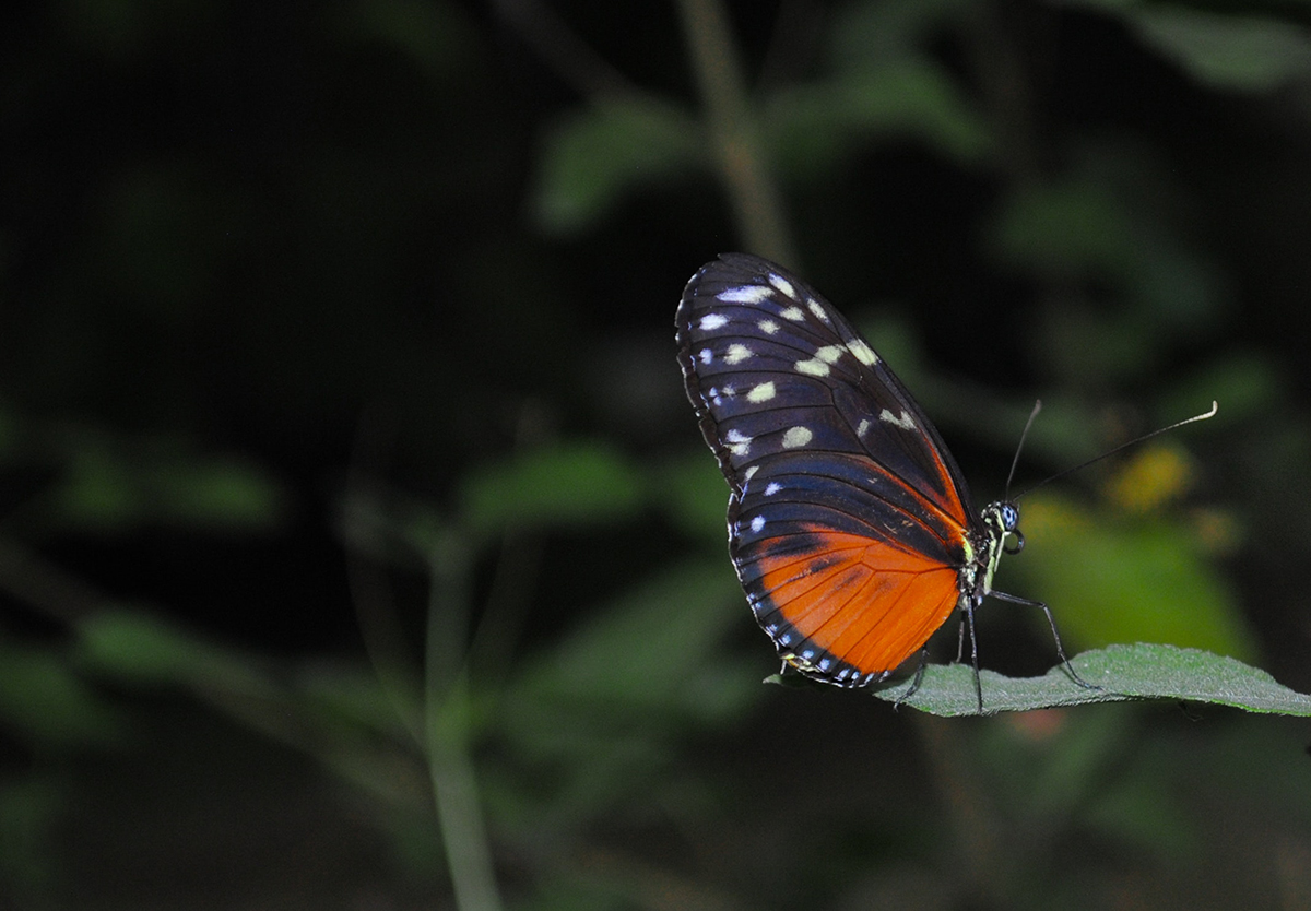 Butterfly Home